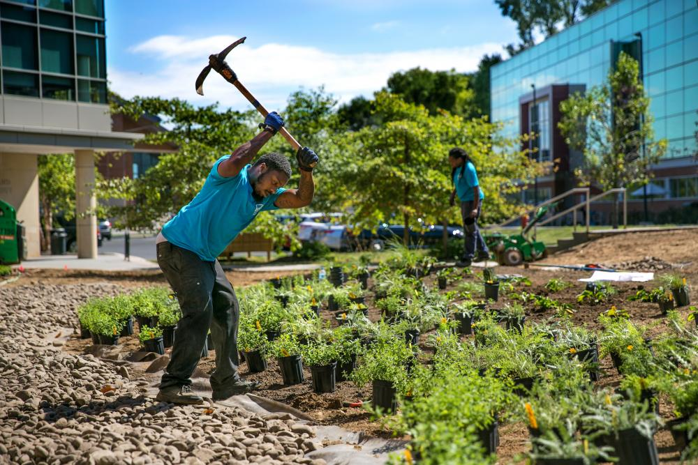 Man works on planting at a new greenspace near University of the Sciences